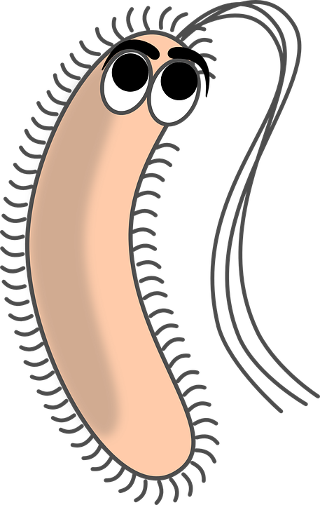 Png images free download. Clipart science bacteria