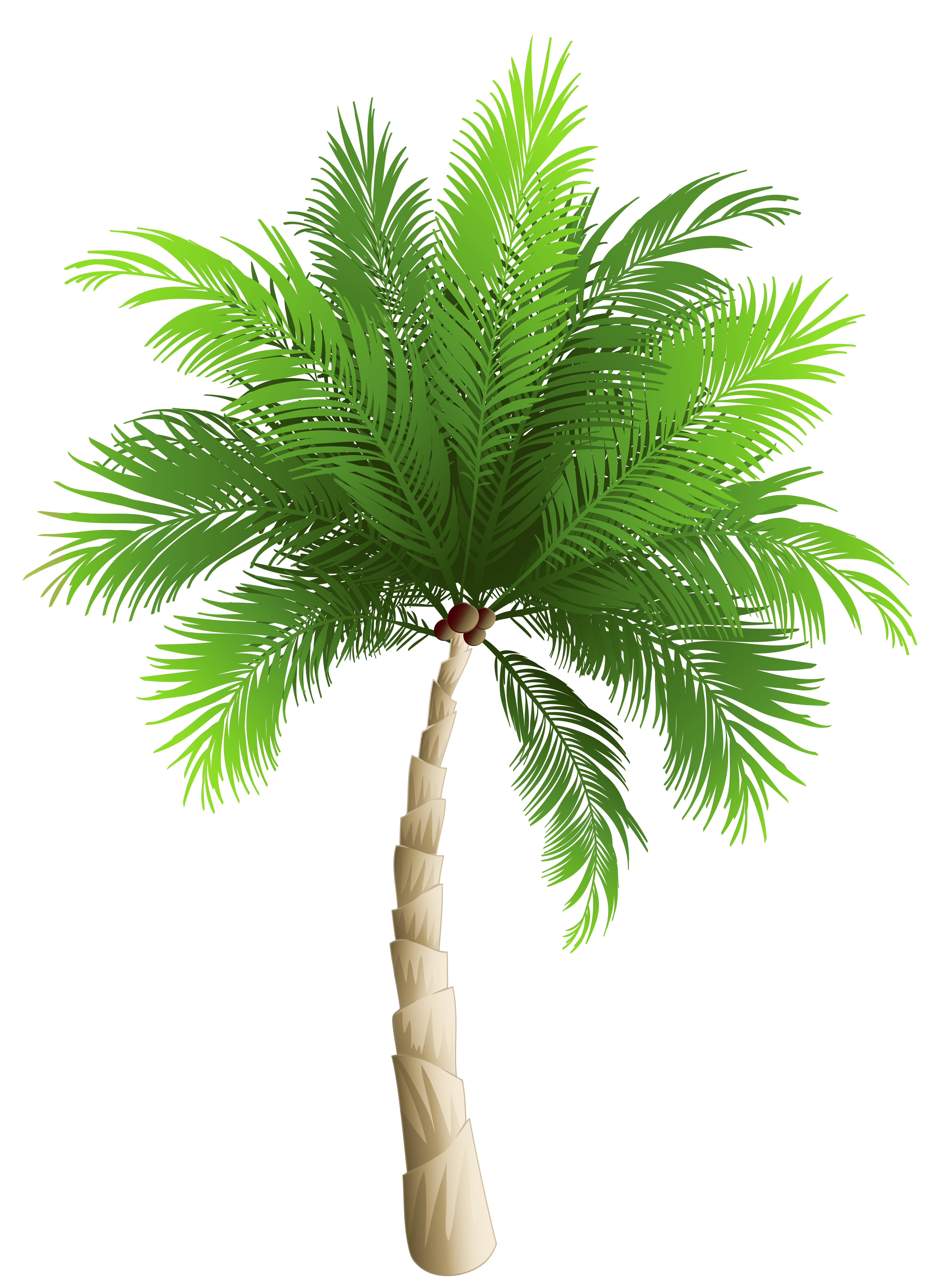 Tree png image sandro. Palm clipart watercolor