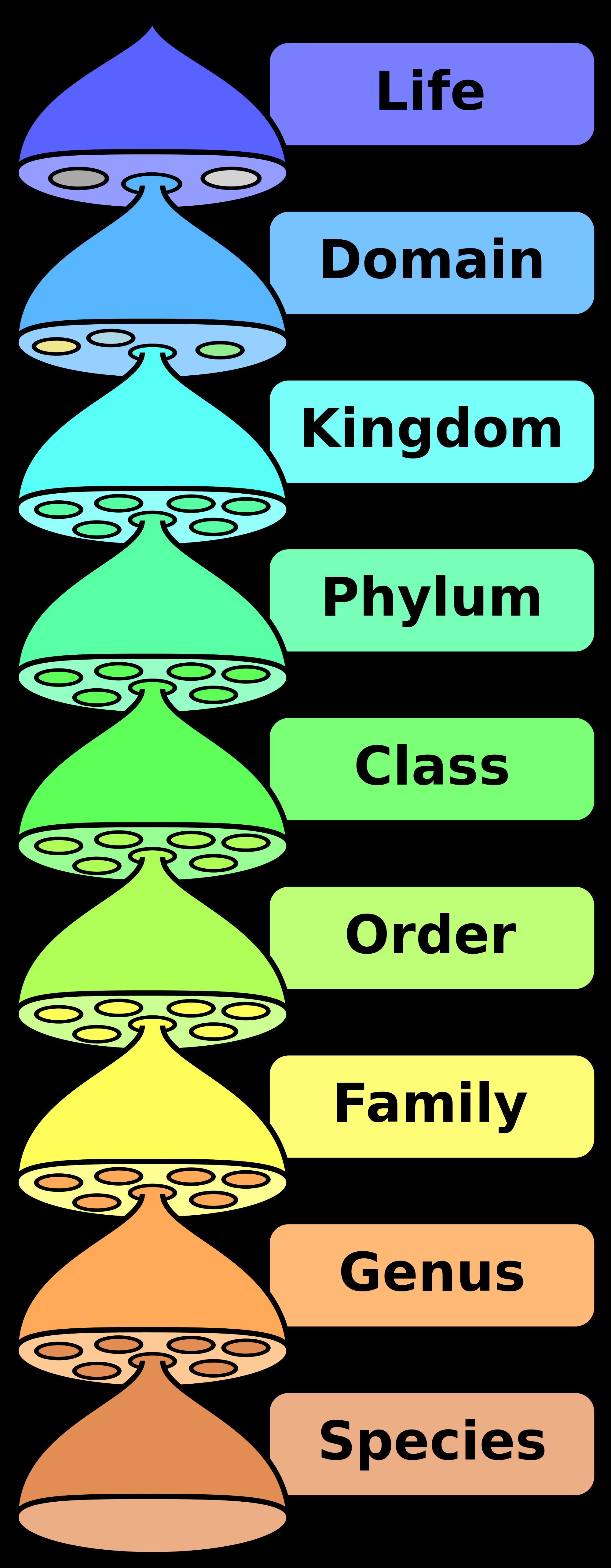 Folder clipart classification. Taxonomic rank wikipedia