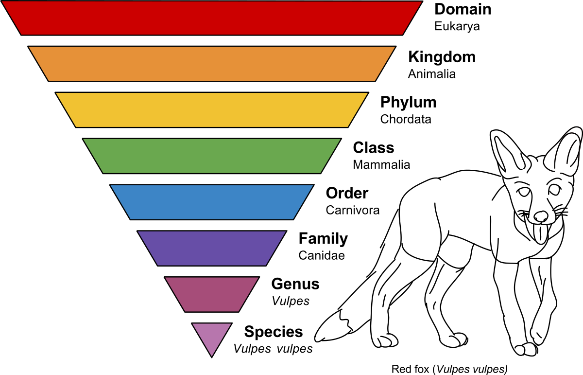 Taxonomic rank wikipedia . Folder clipart classification