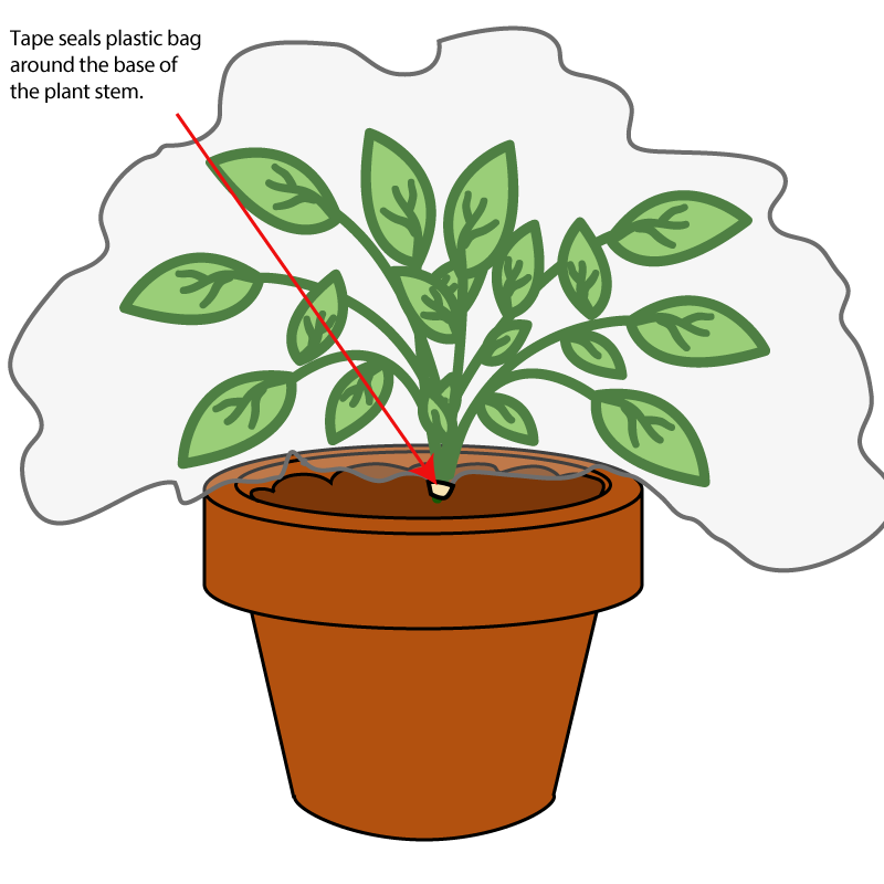 Unit b lessons tes. Plants clipart baby
