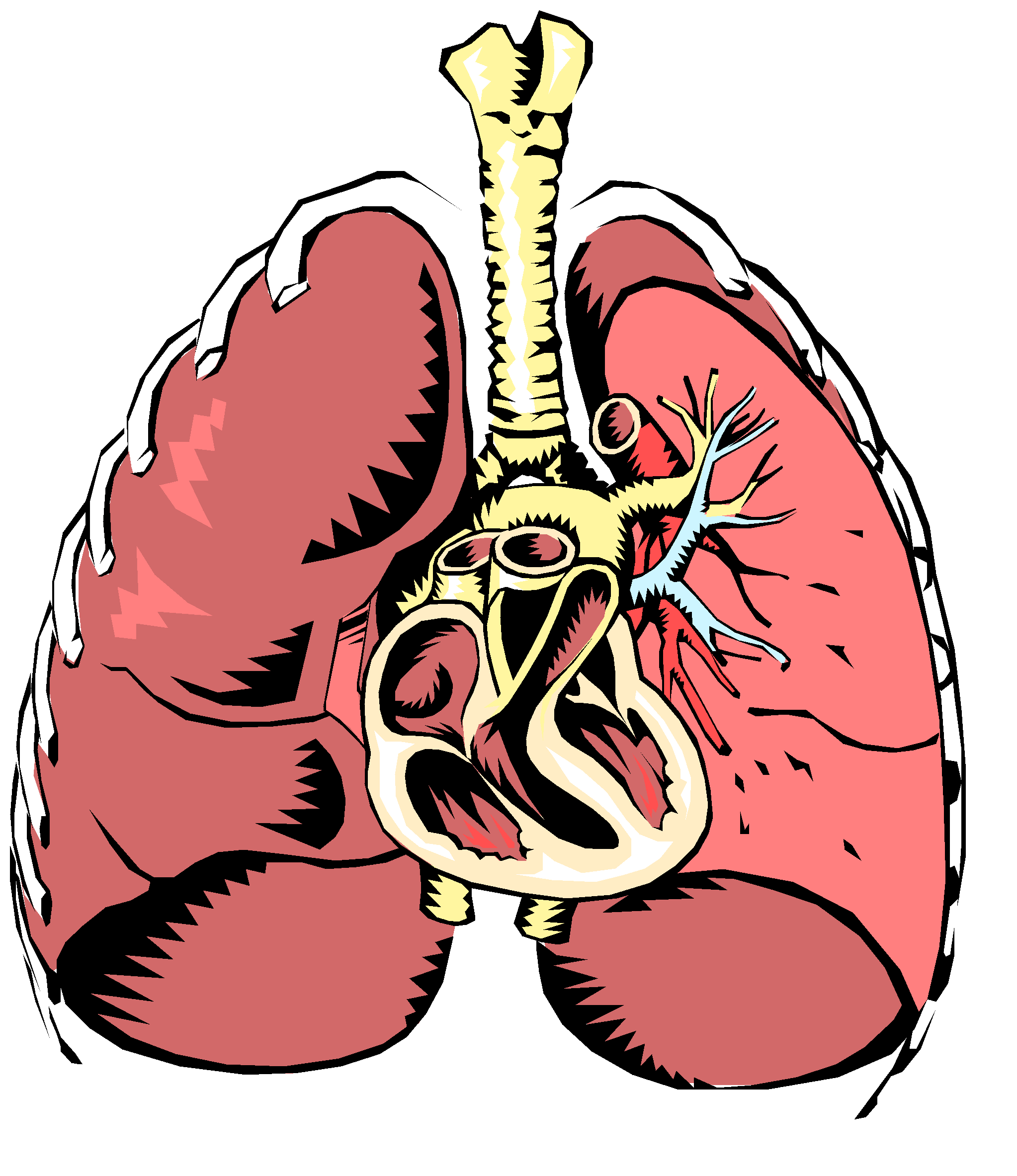 Circulatory system drawing at. Lungs clipart respiration
