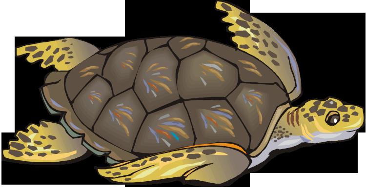 Sea clip art free. Clipart turtle tutle