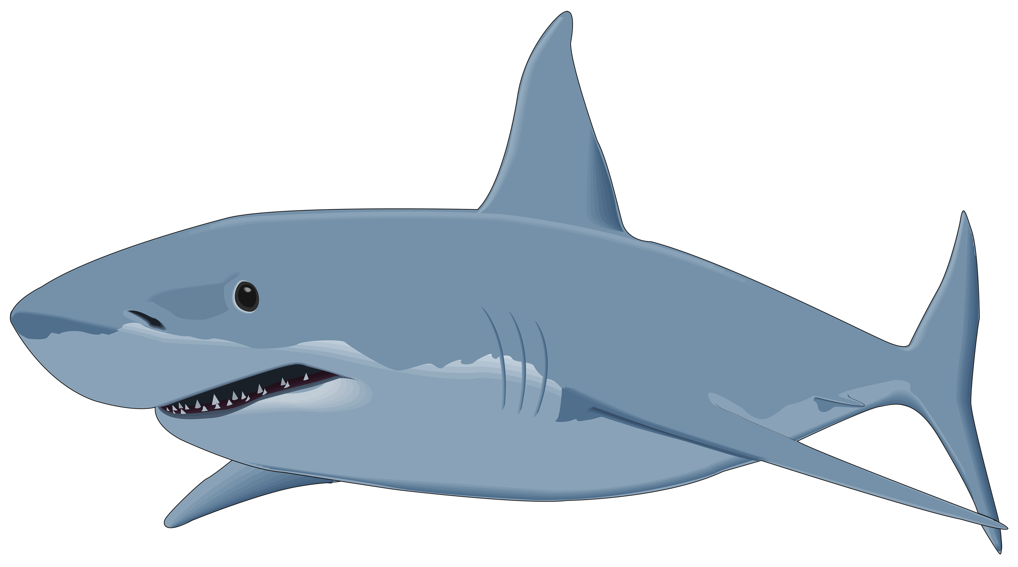 Png image best web. Family clipart shark