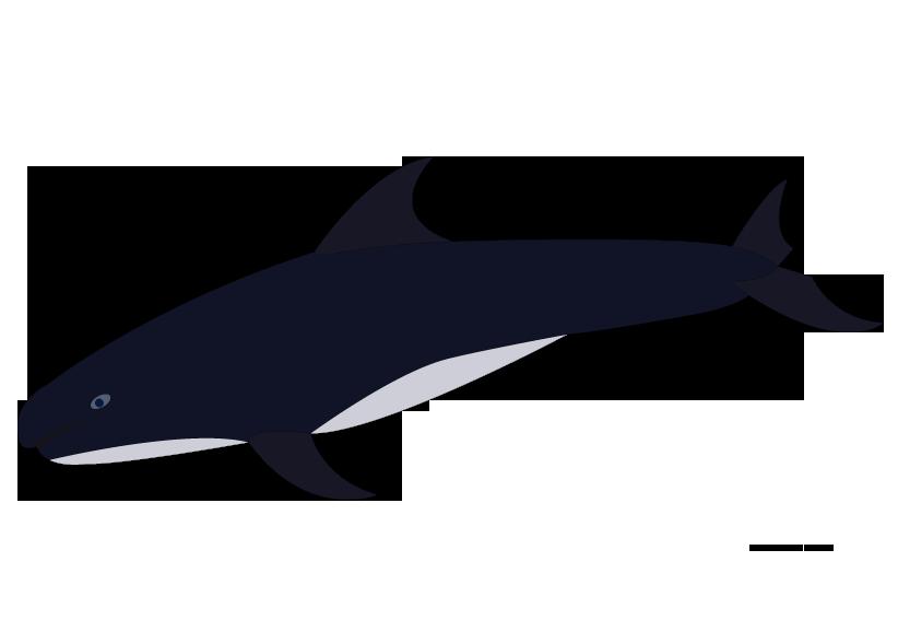 Clipart shark bitmap. Shamu at getdrawings com