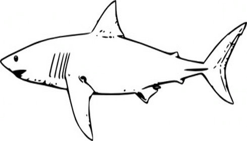 Clip art panda free. Clipart shark black and white