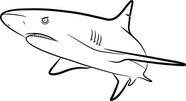 Station . Clipart shark black and white