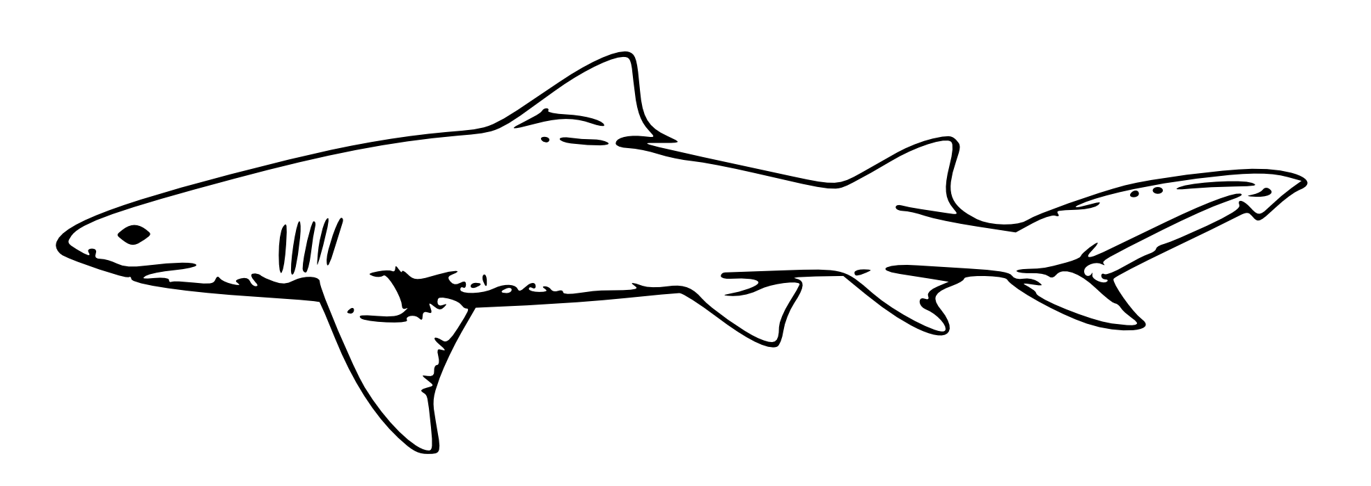 Black and white pictures. Clipart shark blacktip shark