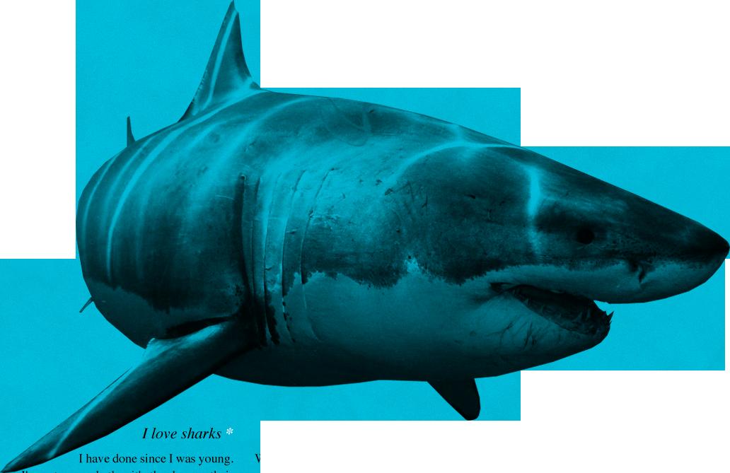 Png . Clipart shark bull shark