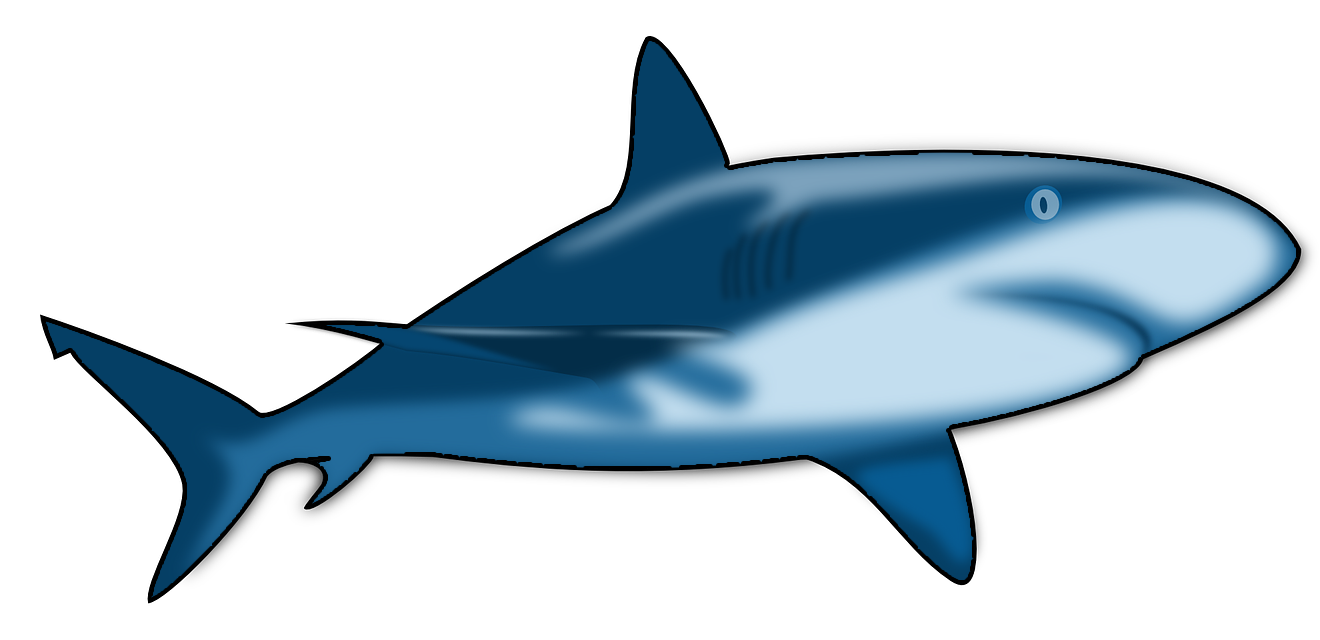 clipart shark bull shark
