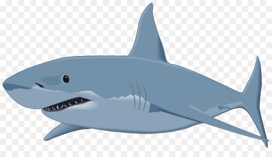 Great white background fish. Clipart shark clip art