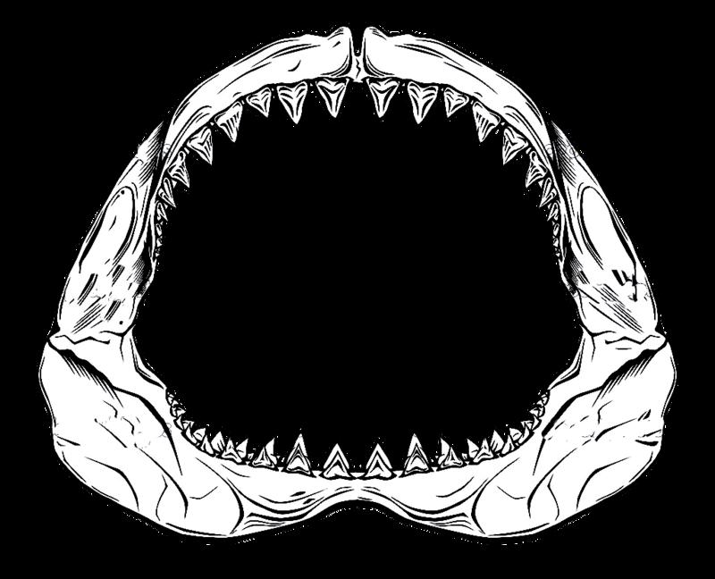 Jaw drawing at getdrawings. Clipart shark frilled shark