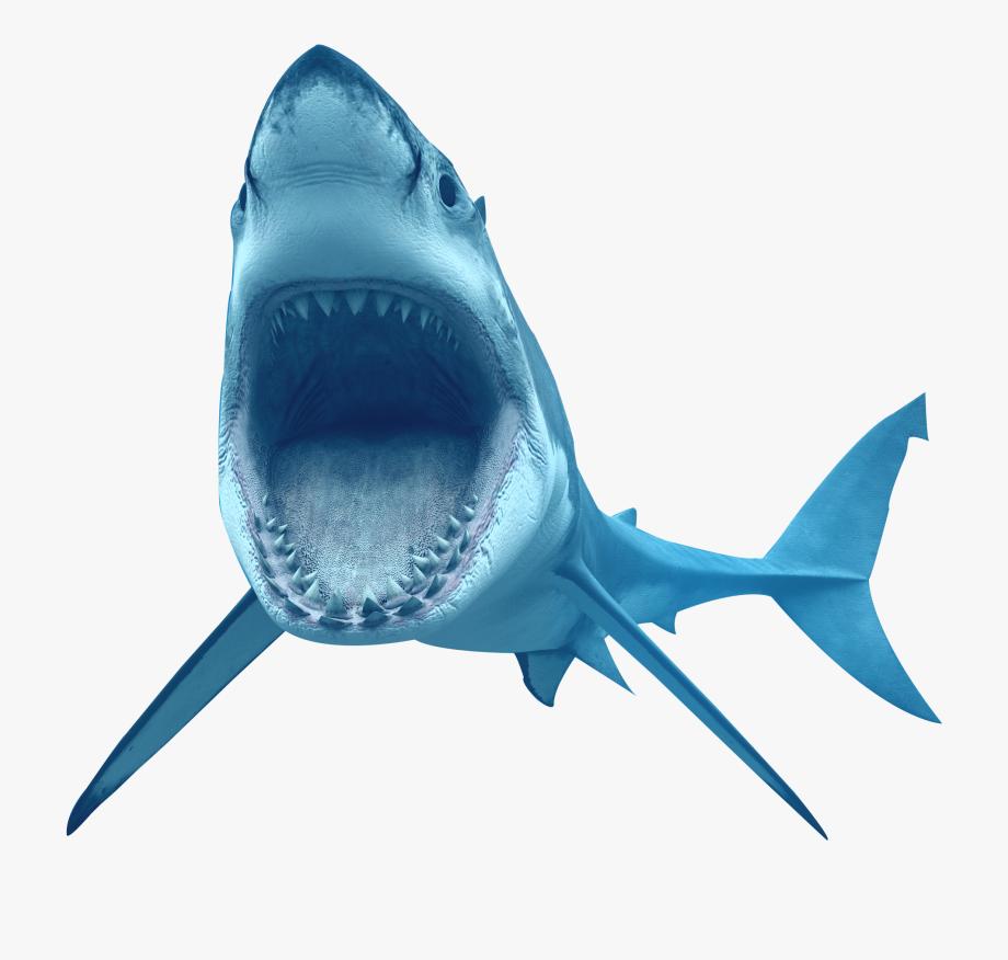 Bull transparent background . Clipart shark great white shark