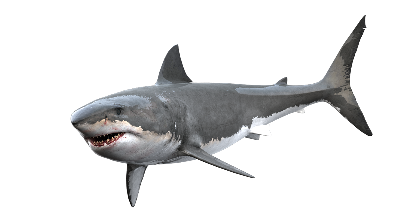 Clipart shark great white shark. Gummy tiger clip art
