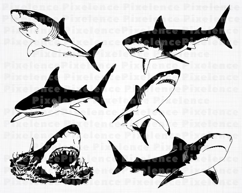 Clipart shark great white shark. Svg files cut for