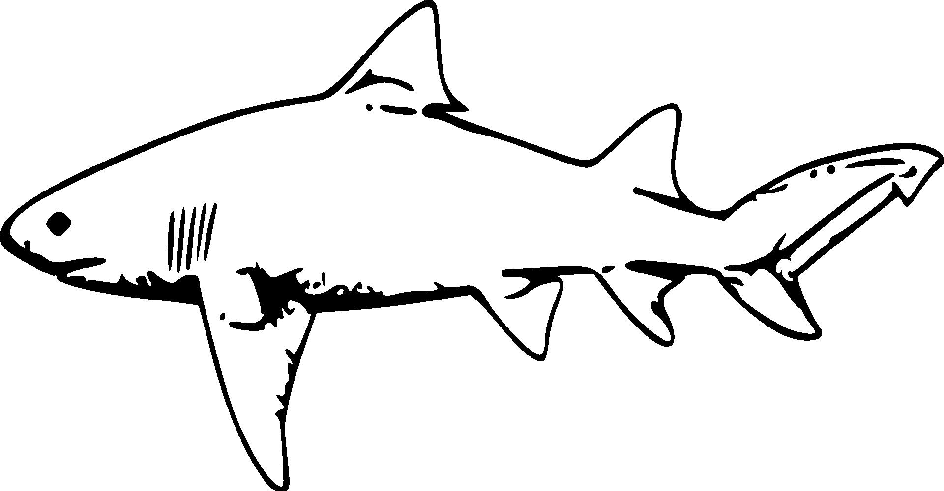 Clipart shark lemon shark. Drawing clip art fish