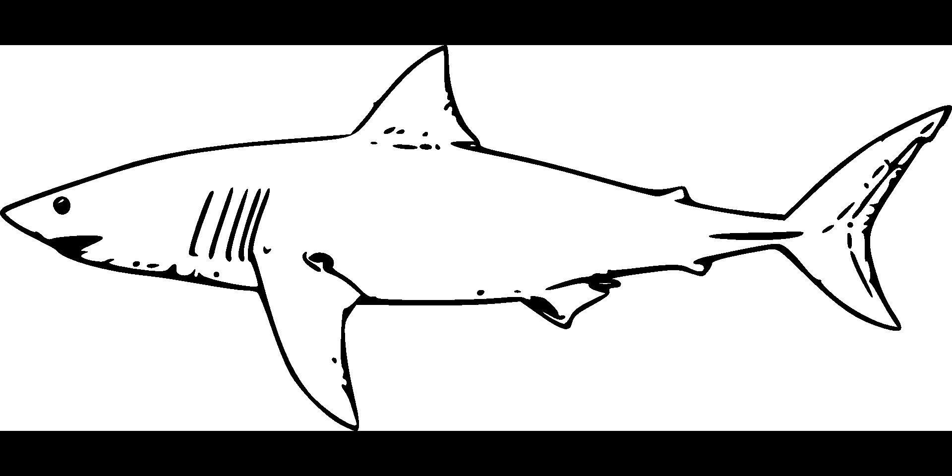 Great white clip art. Clipart shark lemon shark
