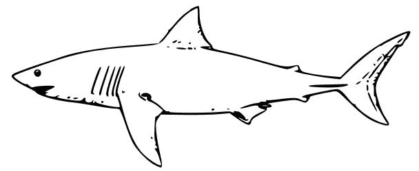 Kids coloring pages activities. Clipart shark lemon shark