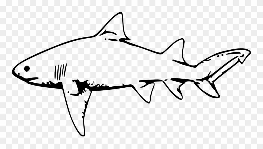 Drawing clip art fish. Clipart shark lemon shark