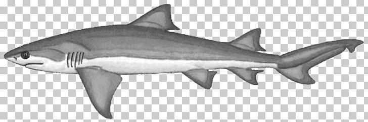Tiger bignose bluntnose sixgill. Clipart shark lemon shark