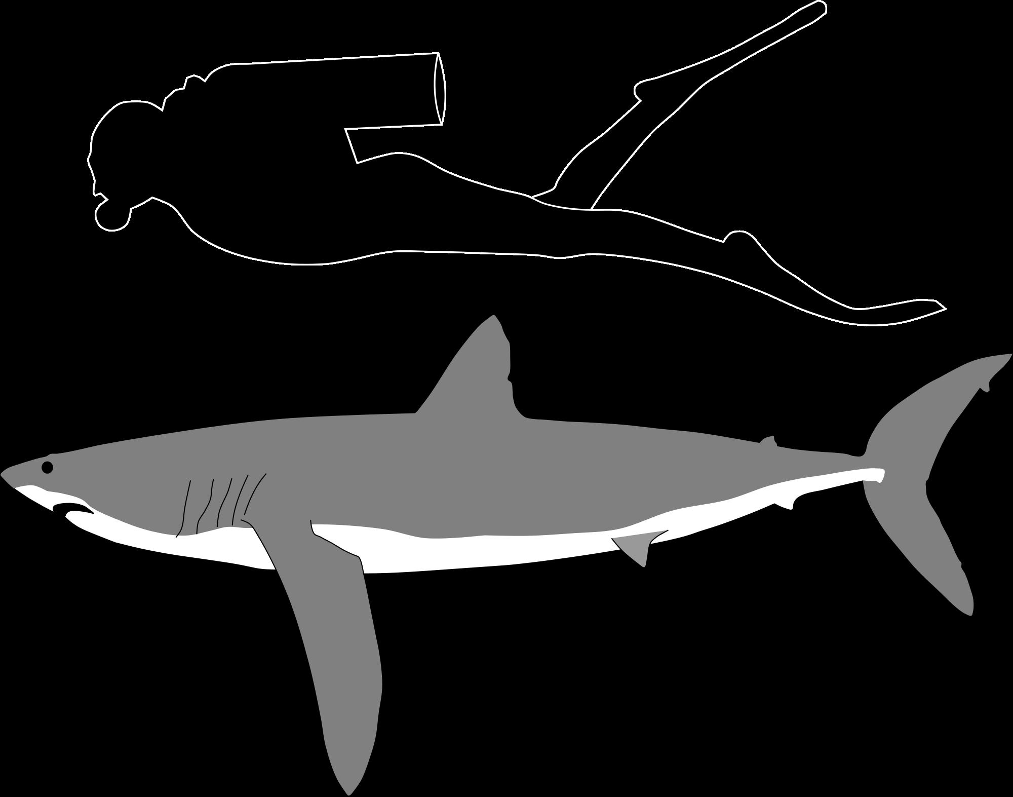 Clipart shark mako shark. Super sharks on emaze