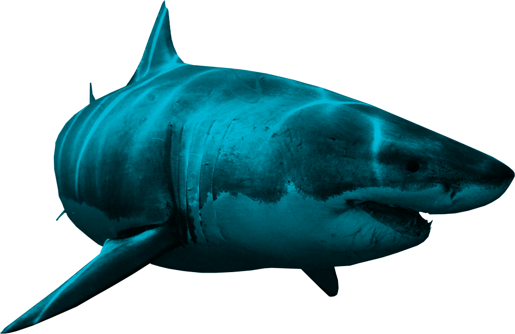 Clipart shark side view. Png animal pinterest