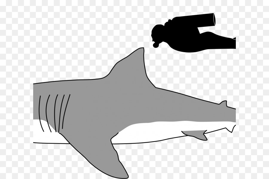 Great white background fish. Clipart shark side view