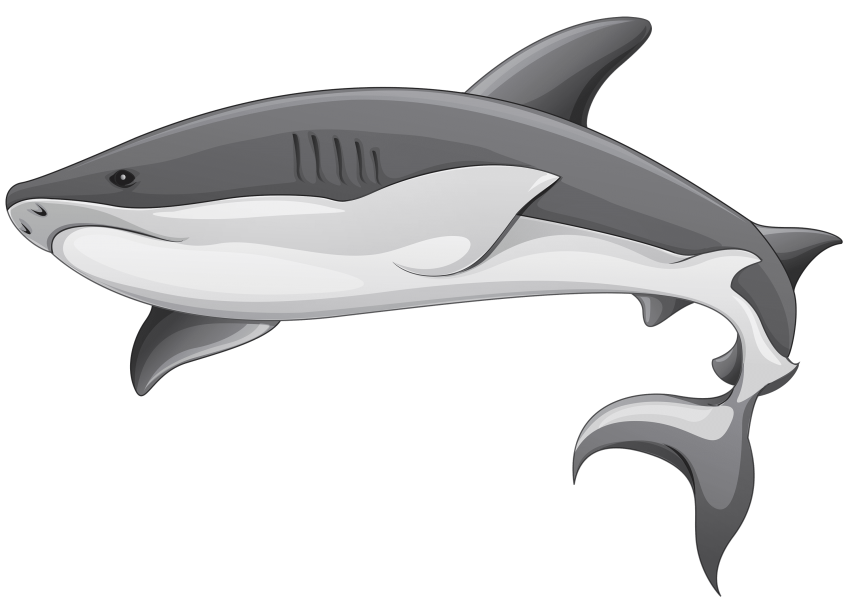 Grey png free images. Clipart shark side view