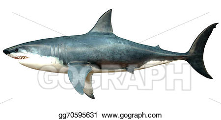 Drawing megalodon profile gg. Clipart shark side view