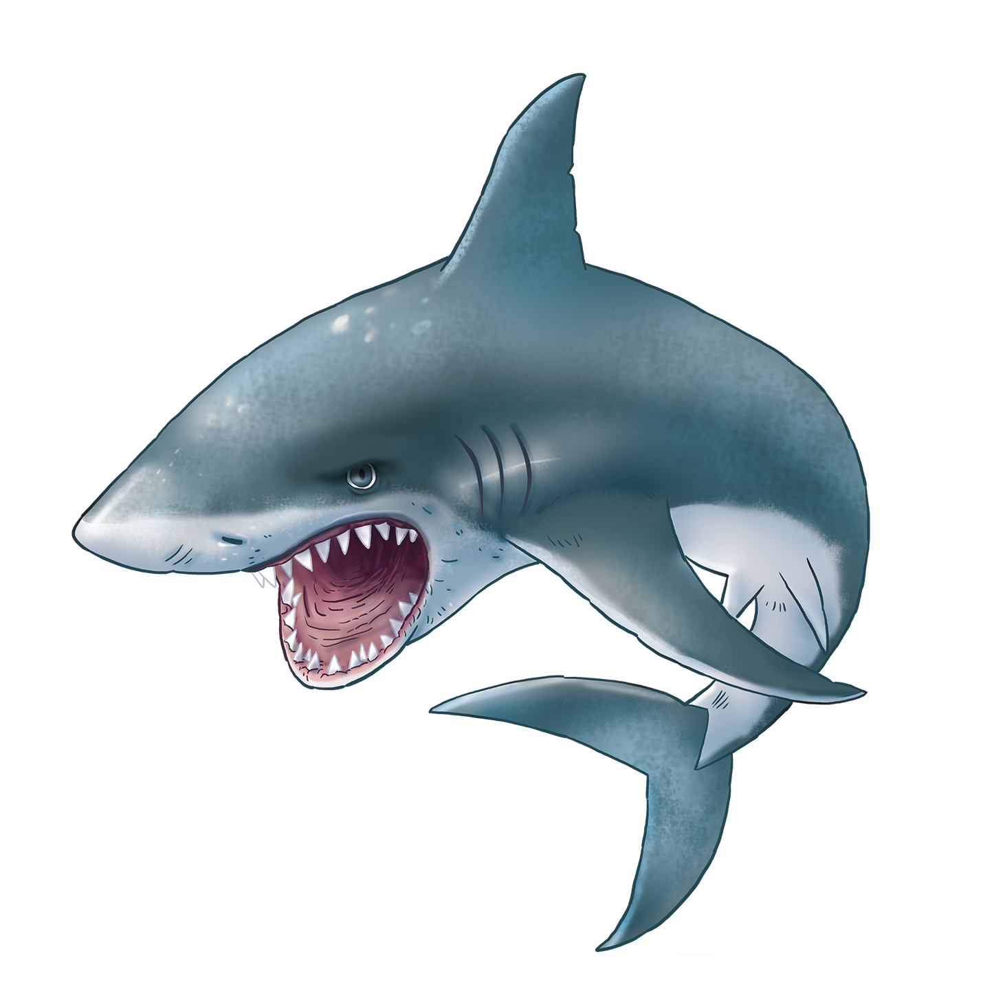Clipart shark tail. Collection of free elasmobranchiate