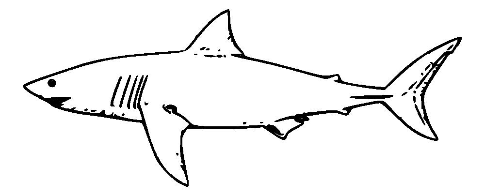 Onlinelabels clip art white. Clipart shark template