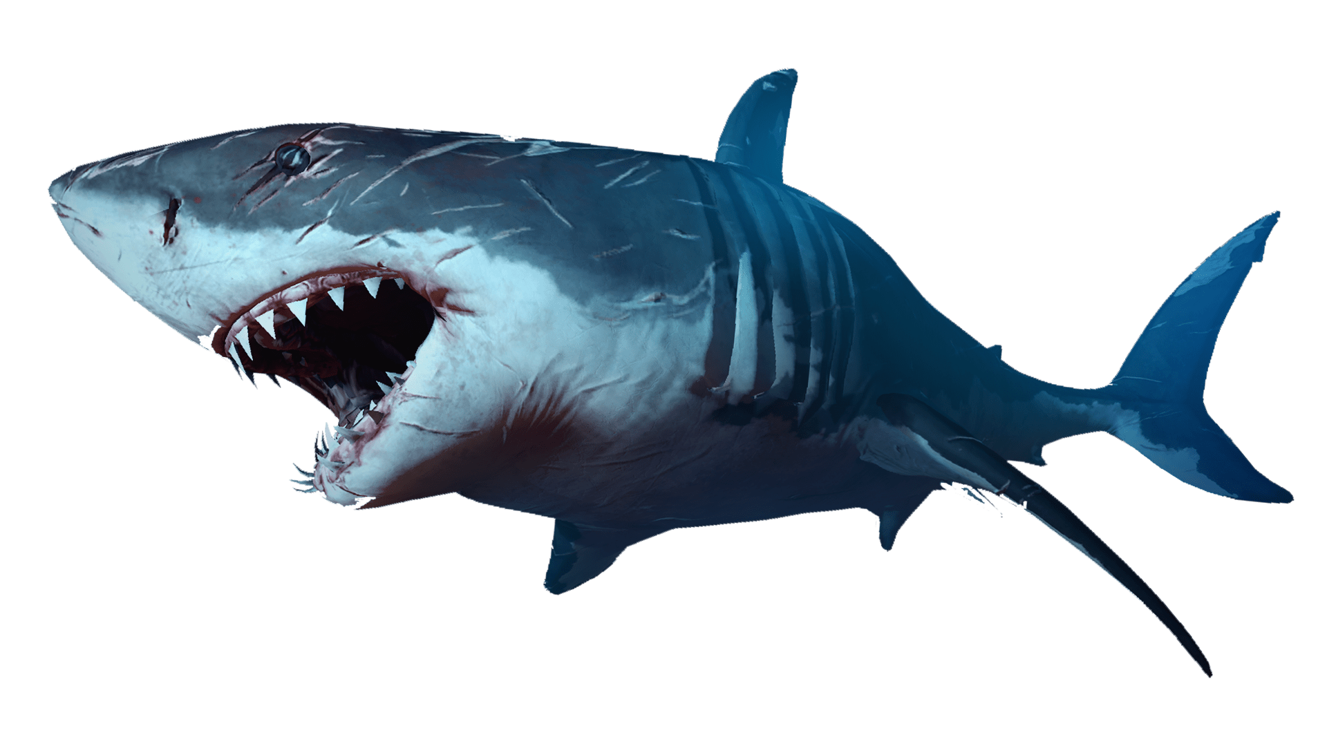 Clipart shark template. Lovely png sea animals
