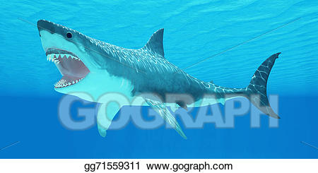 Drawing great white . Clipart shark underwater