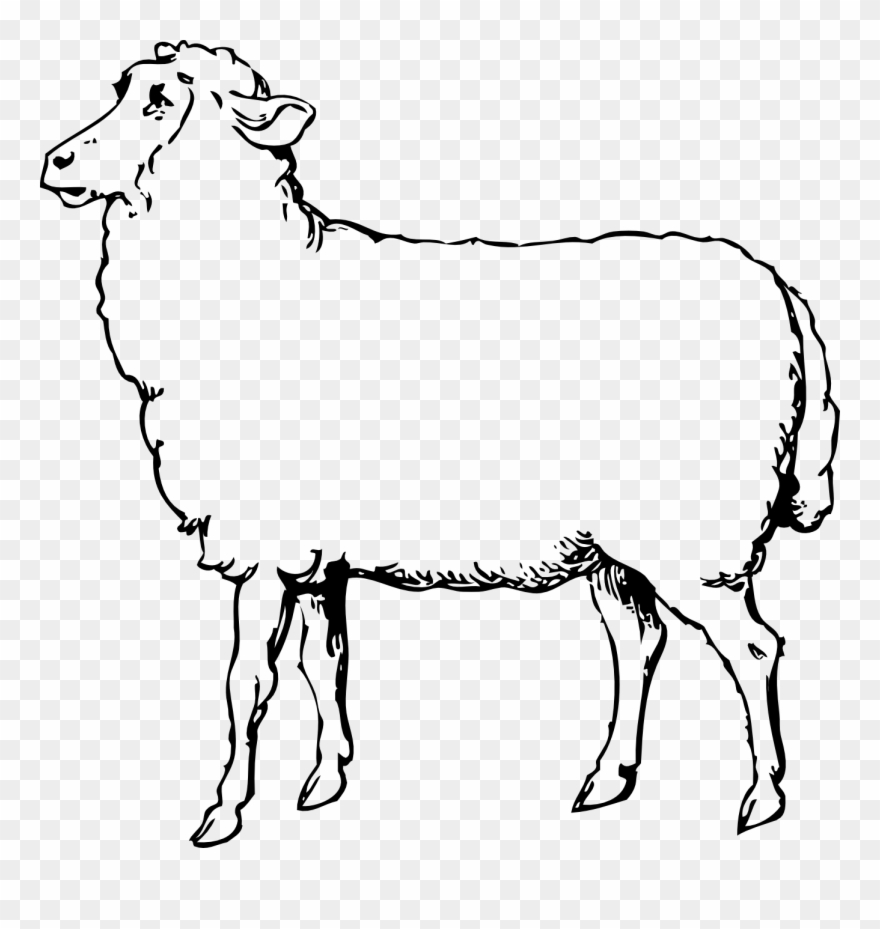 Lamb clipart sheep group. Printable black and white