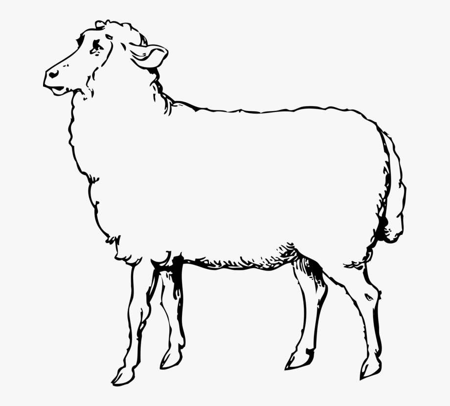 Lamb clipart baby goat. Sheep black and white