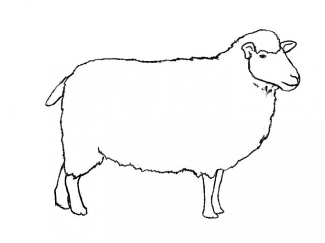 Clipart sheep realistic, Clipart sheep realistic ...