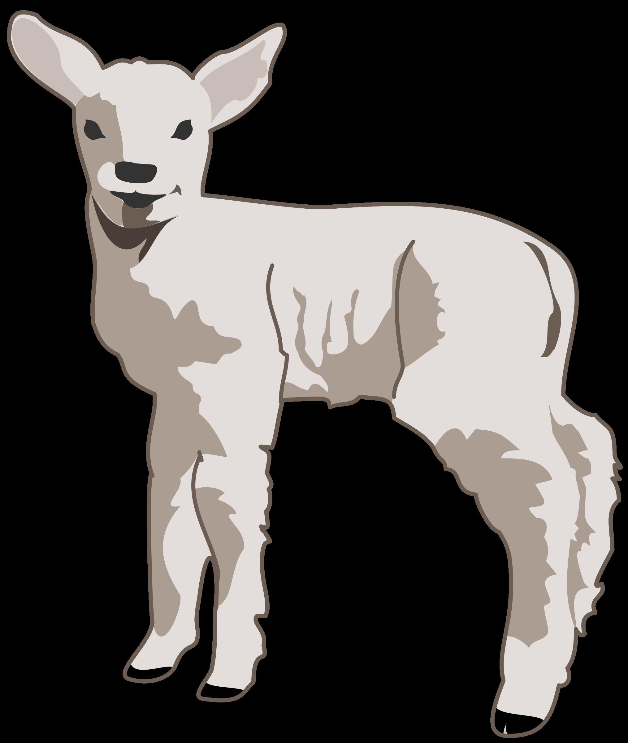 Lamb big image png. Young clipart vector