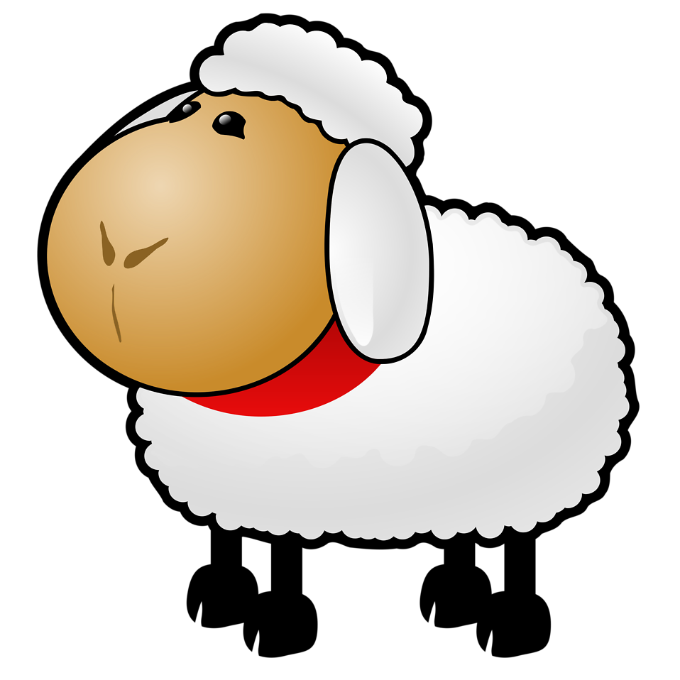 Lamb clipart transparent background. Sheep free stock photo