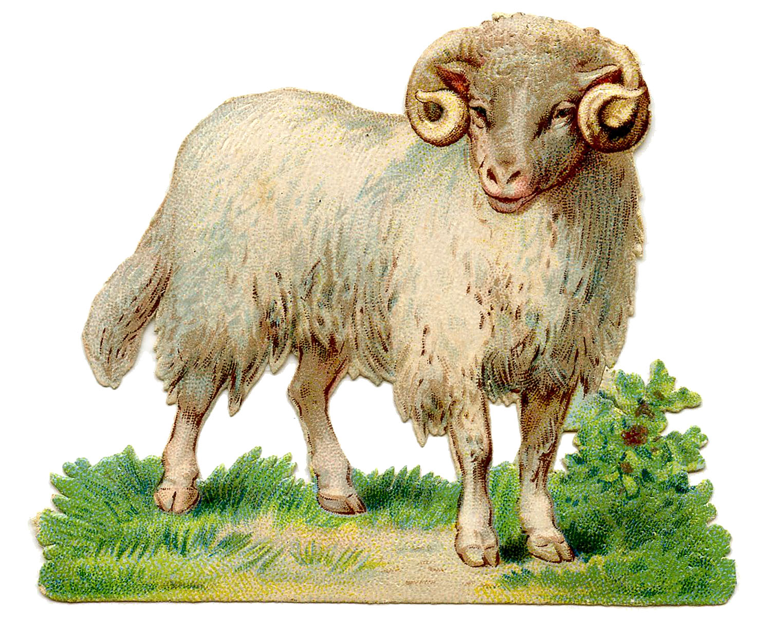 Lamb clipart vintage. Sheep image curly horns