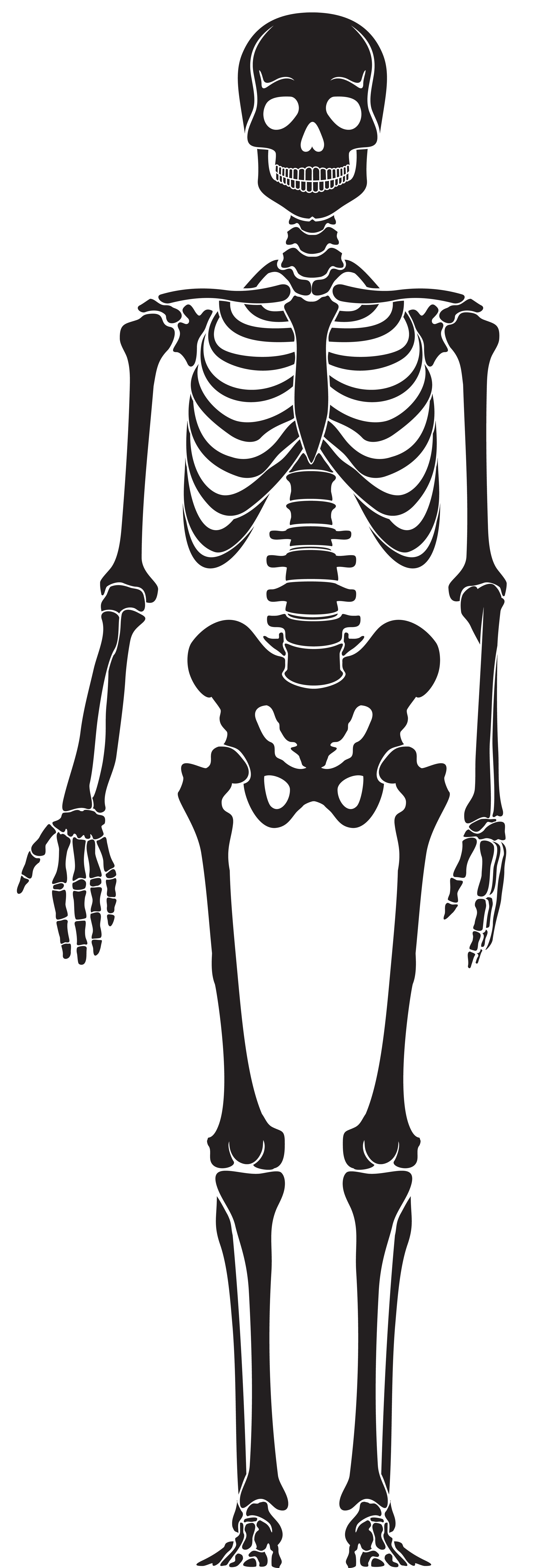 Skeleton clipart skelaton. Silhouette png clip art