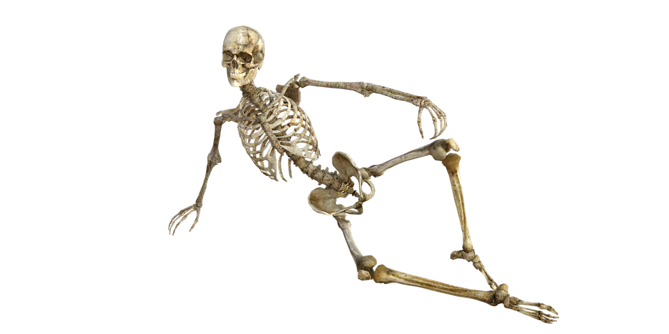 Moving clipart skeleton. Arm shop of library