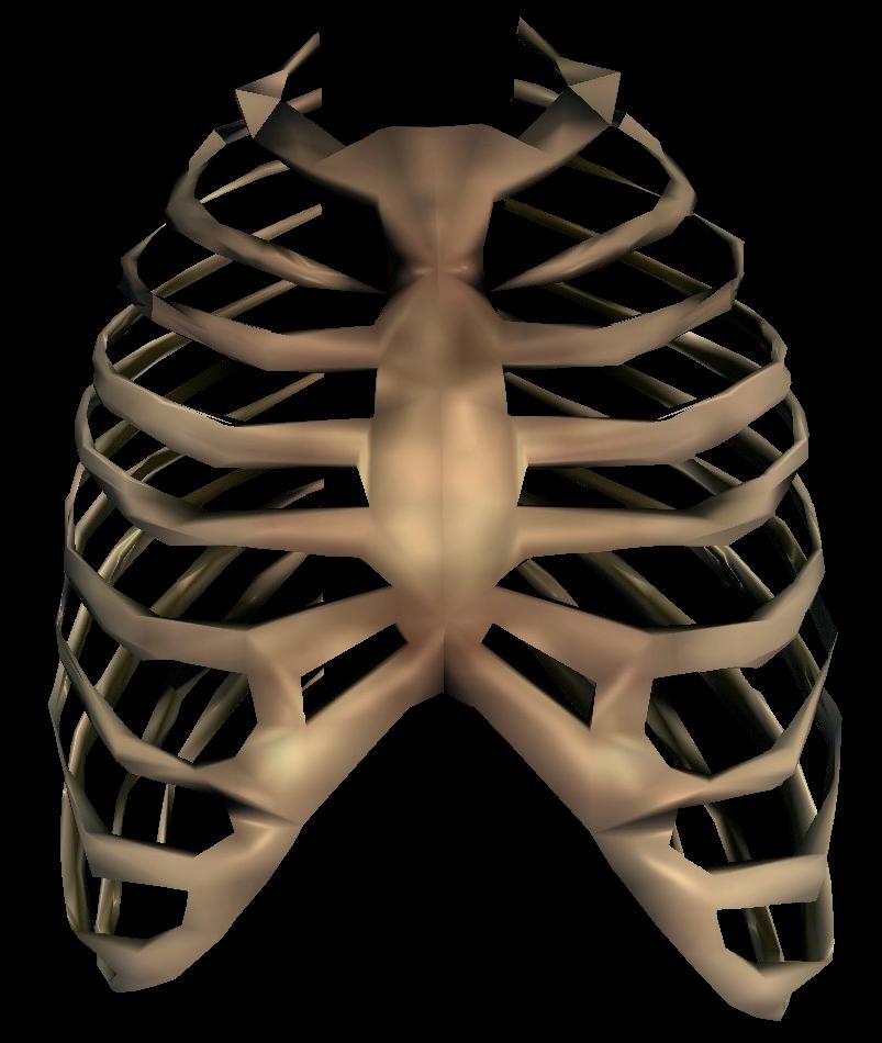 Group transparent clip art. Xray clipart skeleton rib cage