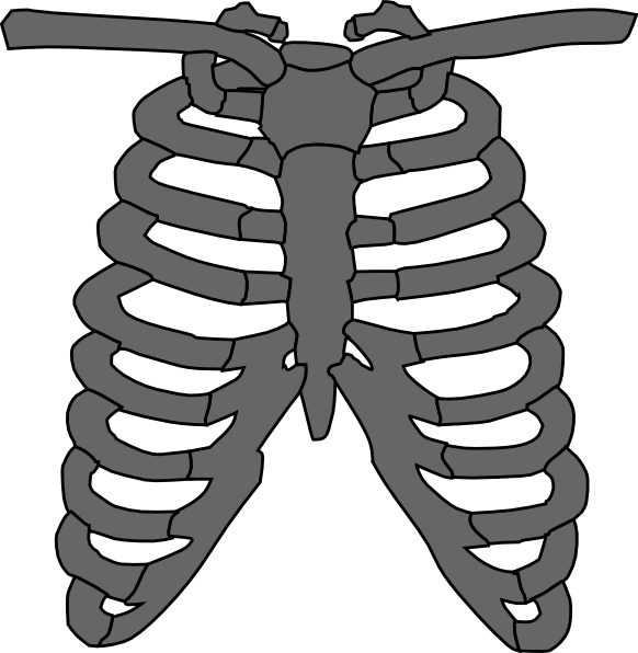 Tattoo edit clip art. Xray clipart skeleton rib cage