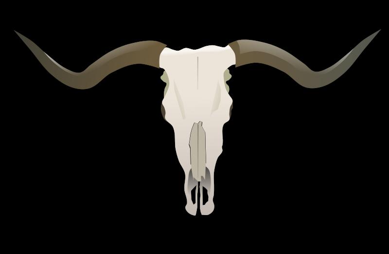Longhorn clipart design. Skull medium image png