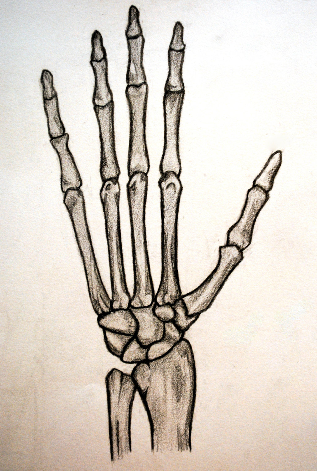 Fist clipart skeleton. Free hand cliparts download