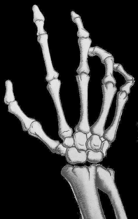 Fist clipart skeleton. Hand soul p more