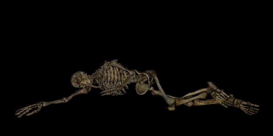 Skeleton human skeleton