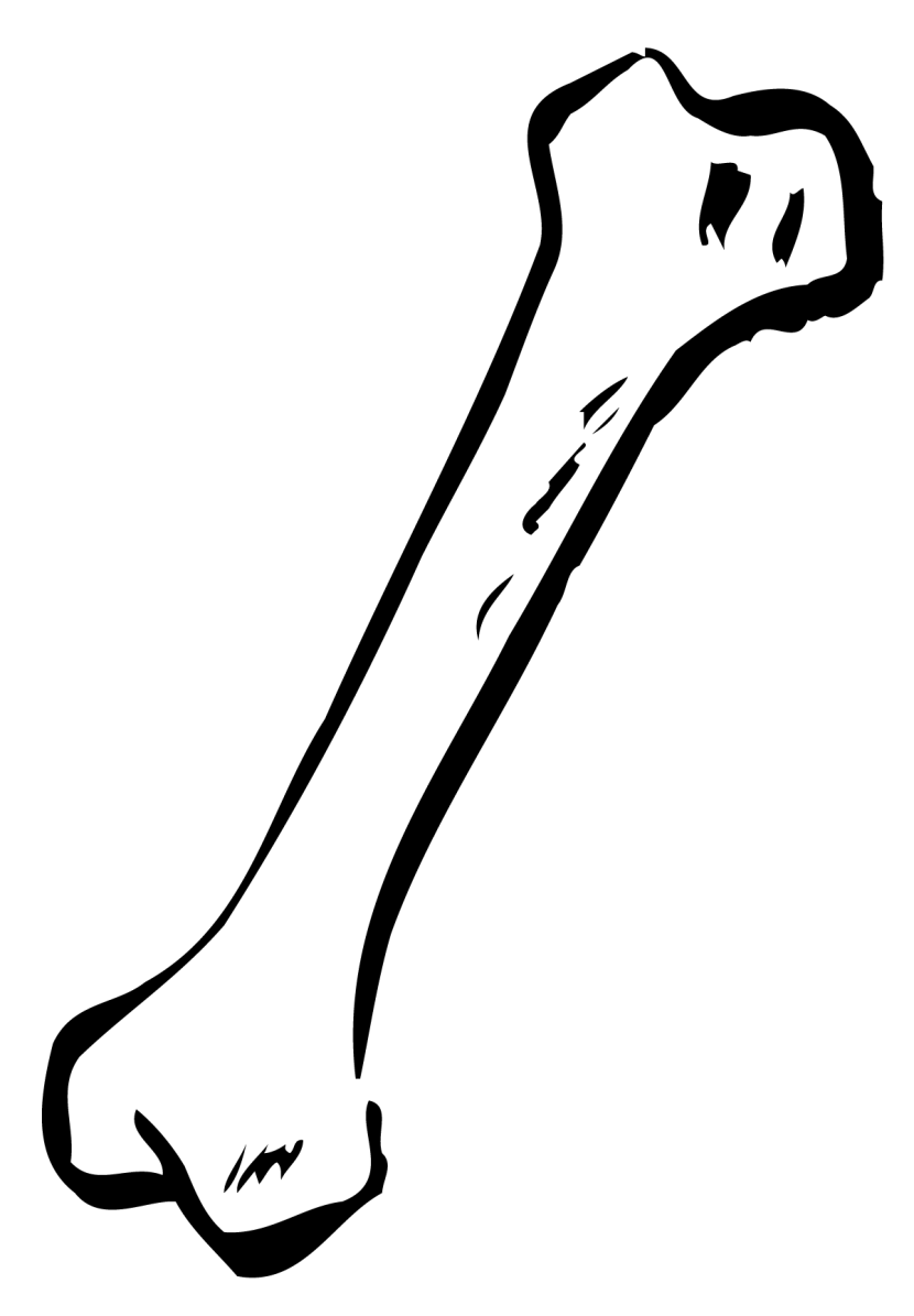 Dog human skeleton clip. Bone clipart animal bone
