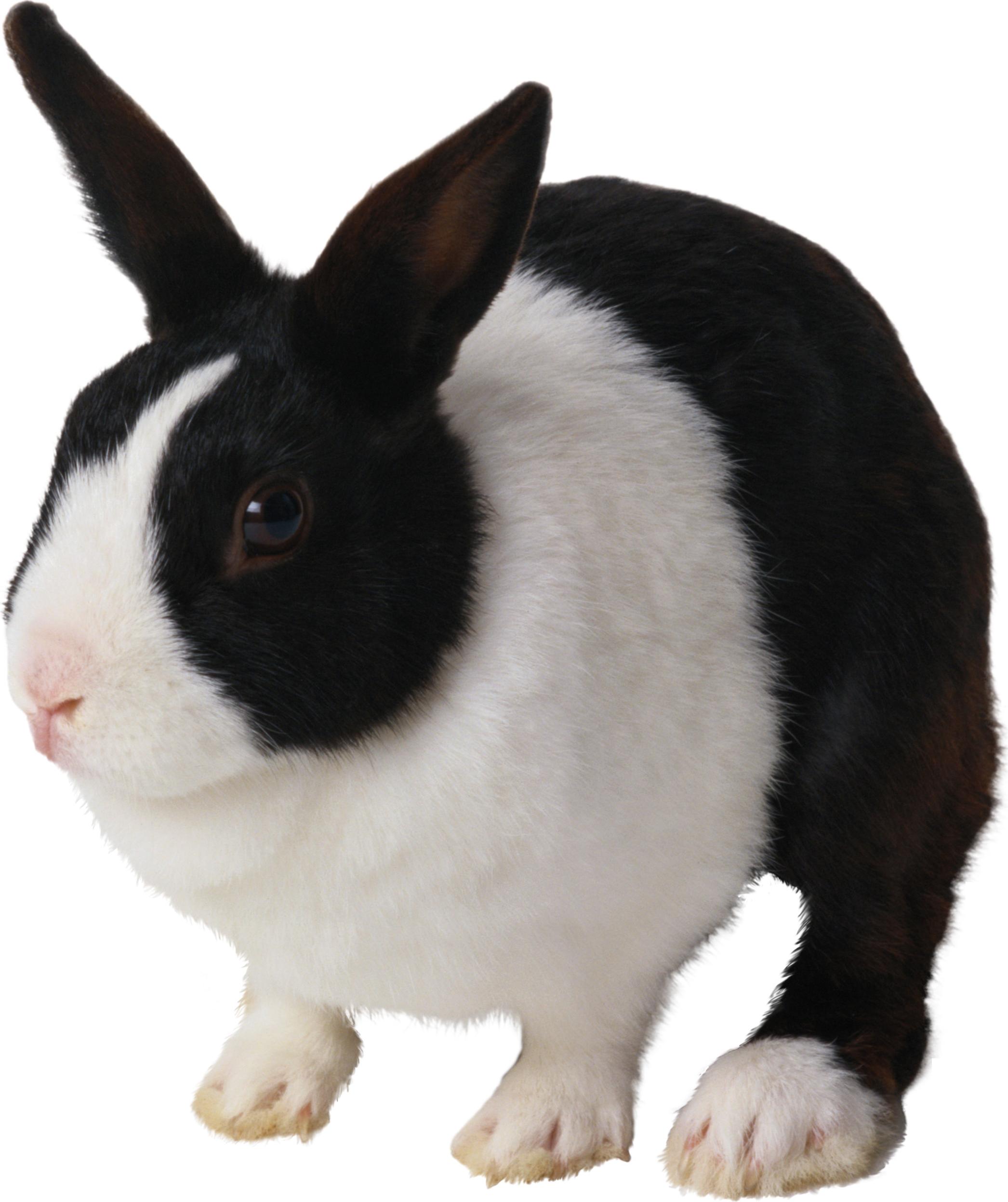 Ten isolated stock photo. Meat clipart rabbit meat
