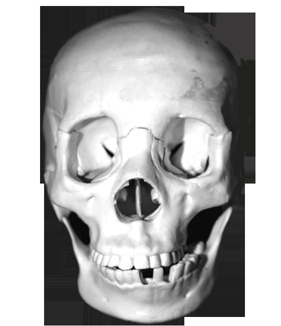 Cool skull clip art. Skeleton clipart sideways